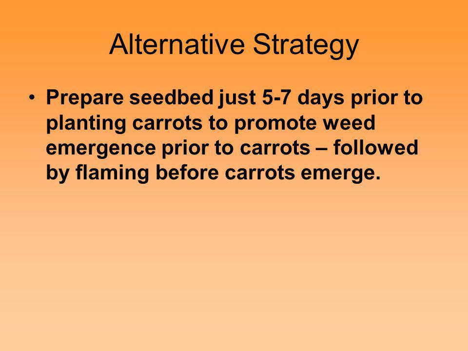 Alternative Strategy Prepare seedbed just 5-7 days prior to planting carrots to promote weed emergence prior to carrots – followed by flaming before c