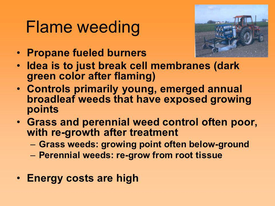 Flame weeding Propane fueled burners Idea is to just break cell membranes (dark green color after flaming) Controls primarily young, emerged annual br