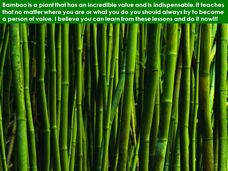 Bamboo is a plant that has an incredible value and is indispensable. It teaches that no matter where you are or what you do you should always try to b