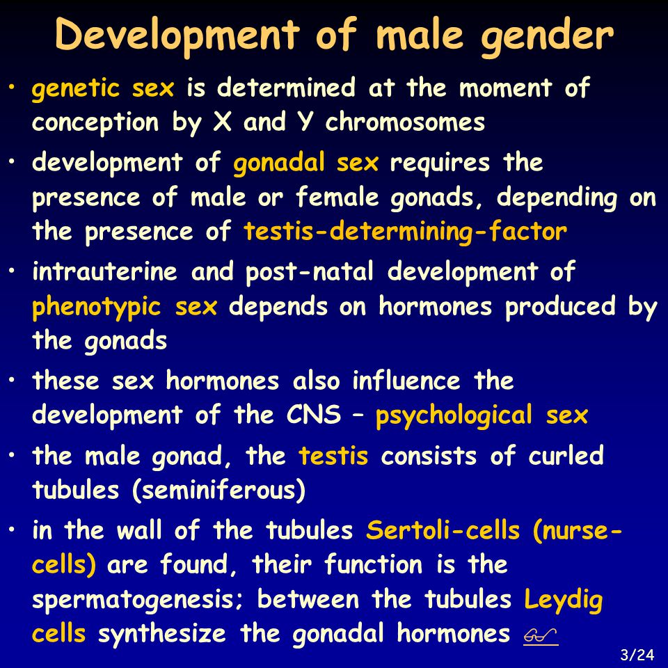 Ovarian hormone production I.