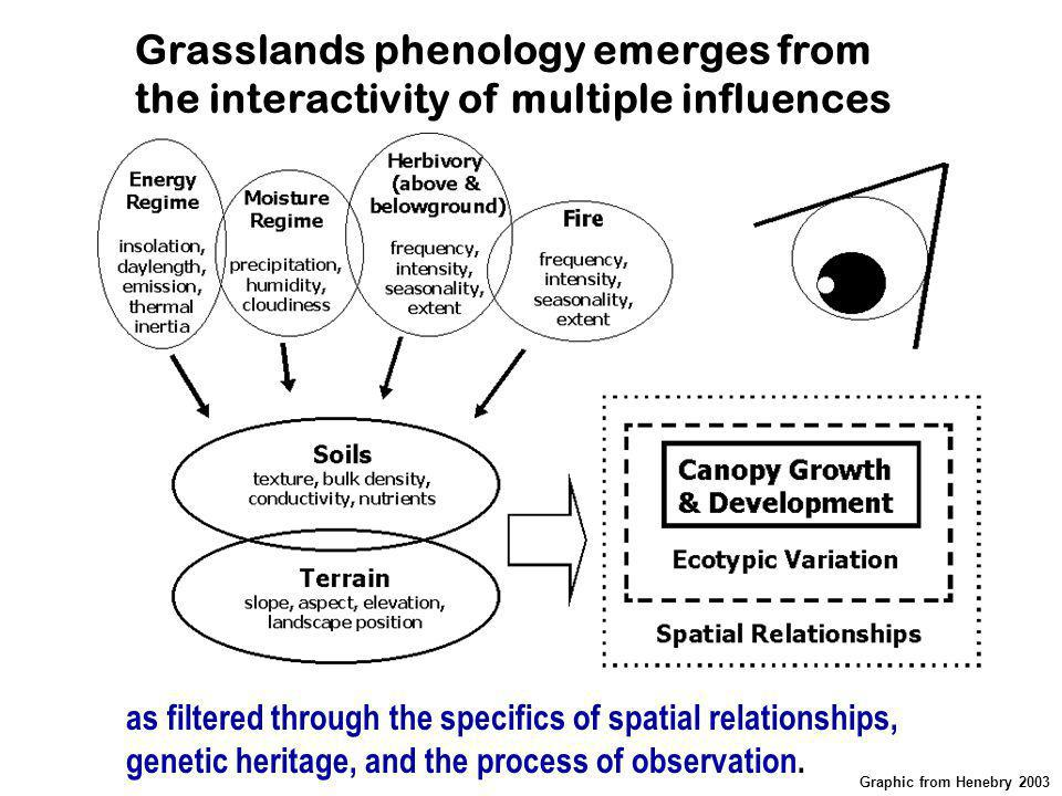 Grasslands phenology emerges from the interactivity of multiple influences as filtered through the specifics of spatial relationships, genetic heritag