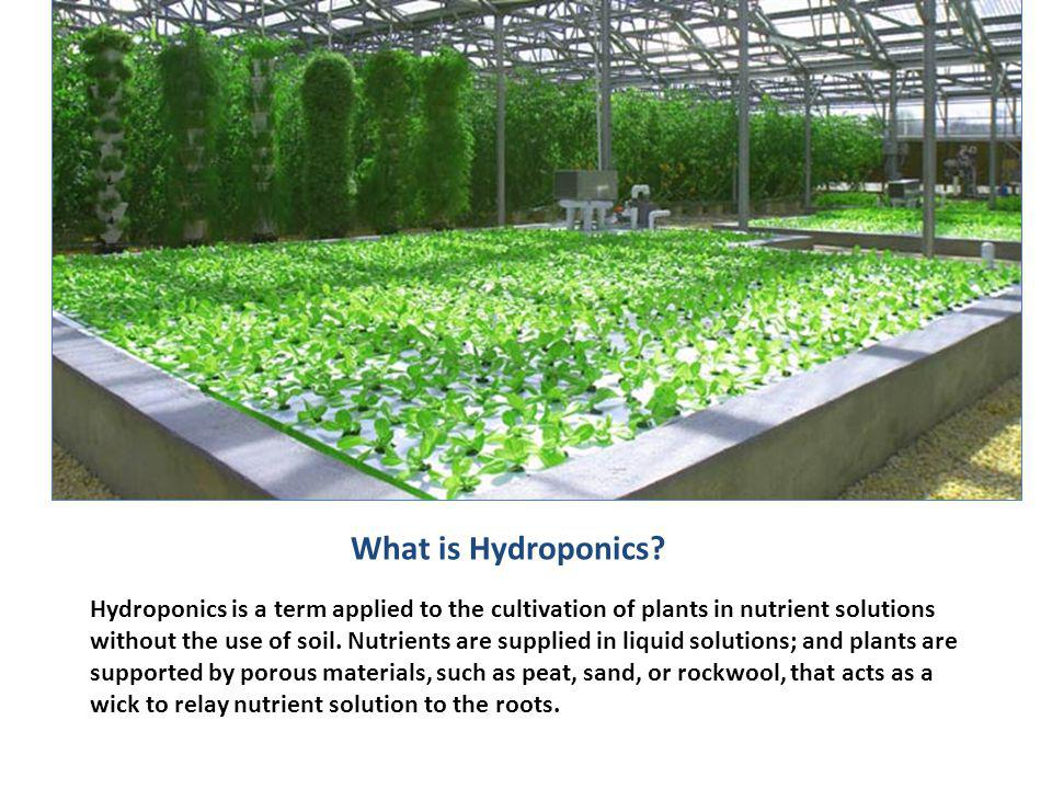 Aeroponic Gardening…not just for astronauts.