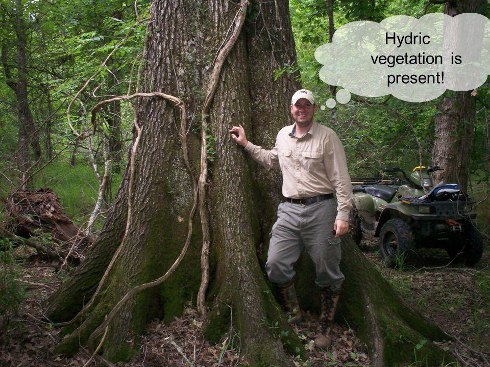 Vegetation Hydric vegetation is present!