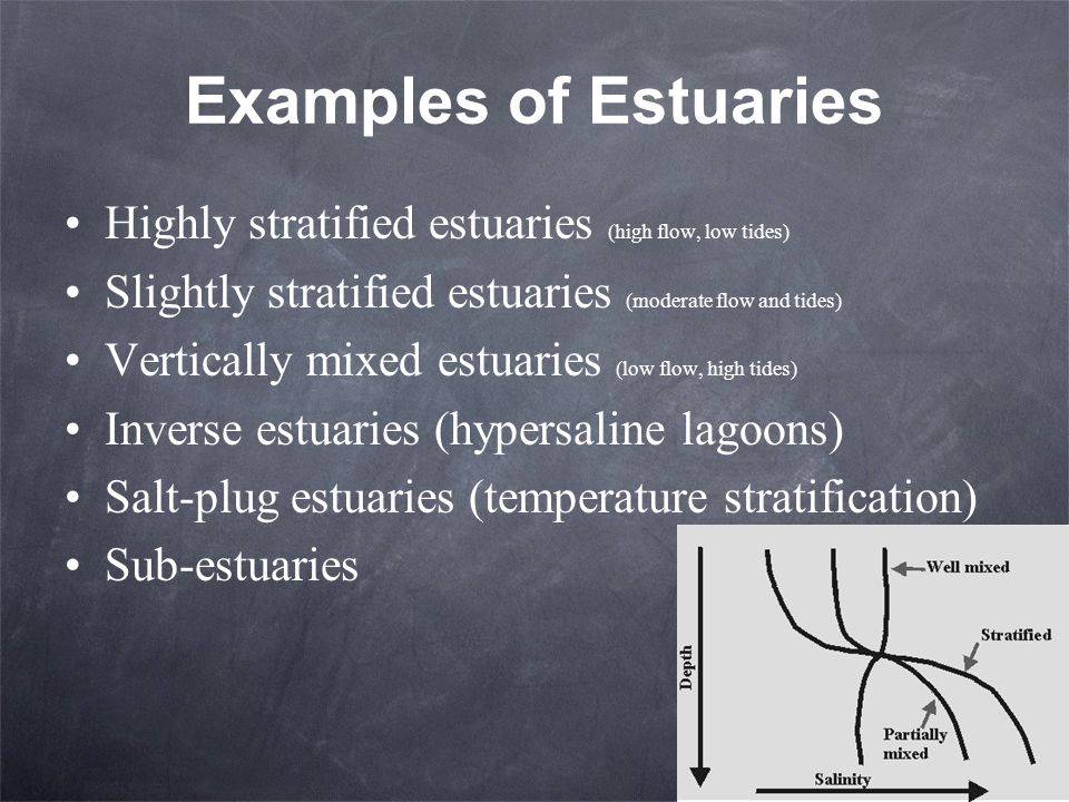 Examples of Estuaries Highly stratified estuaries (high flow, low tides) Slightly stratified estuaries (moderate flow and tides) Vertically mixed estu