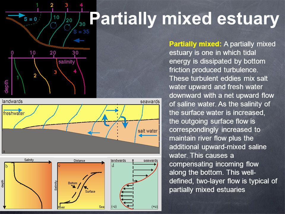 Partially mixed estuary Partially mixed: A partially mixed estuary is one in which tidal energy is dissipated by bottom friction produced turbulence.