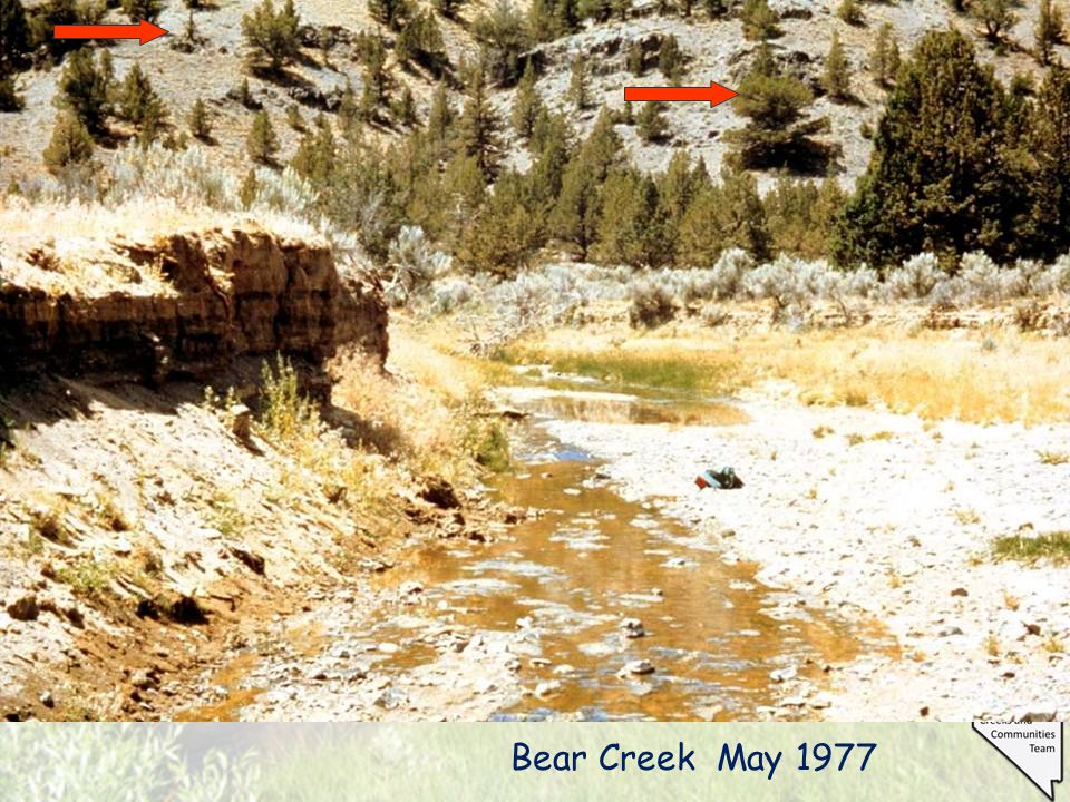 Bear Creek May 1977