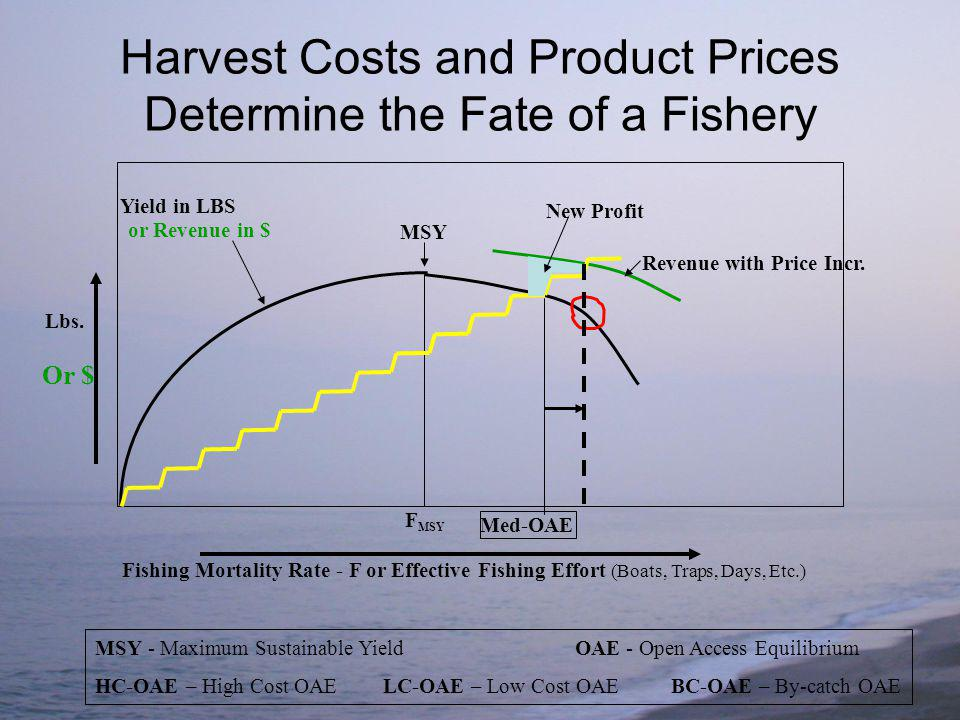 F MSY Fishing Mortality Rate - F or Effective Fishing Effort (Boats, Traps, Days, Etc.) Yield in LBS Lbs.