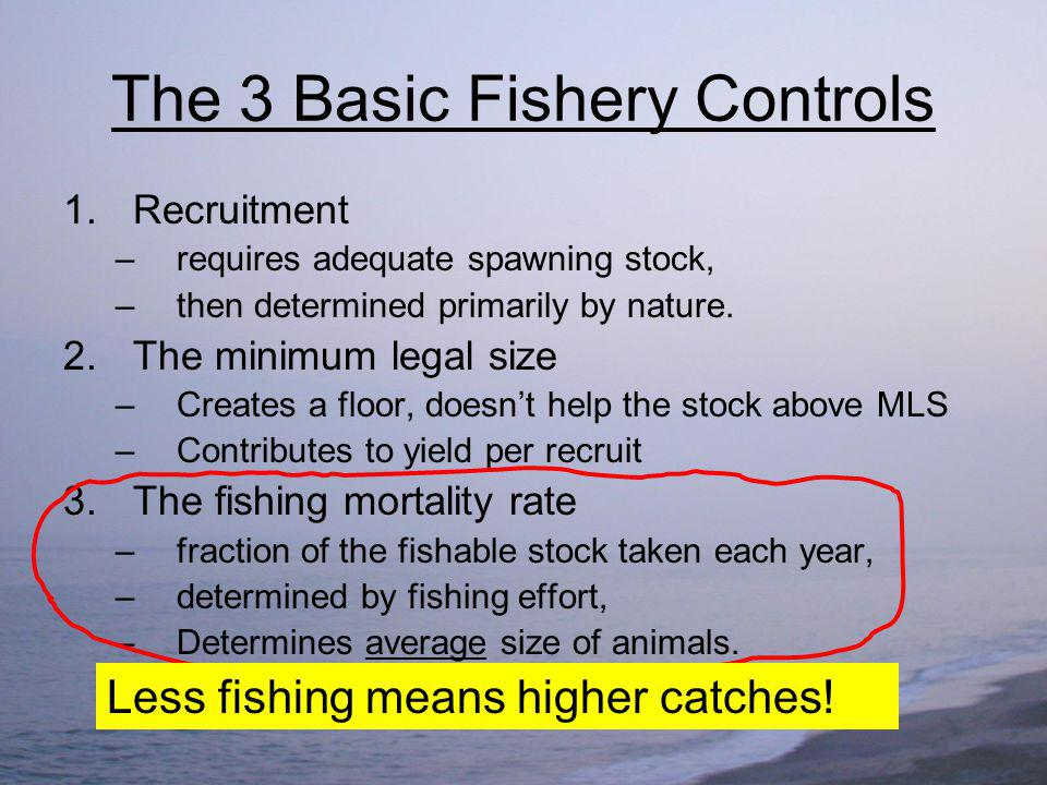 Investing in Conservation Reduce fishing effort – save costs Leave legal animals to grow and reproduce – larger biomass Harvest greater yield at lower cost – fishermen make money on high CPUE Reduce variability Profit from sustainability