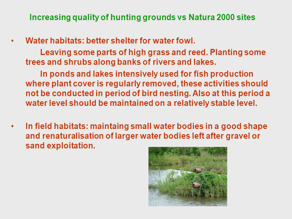 Increasing quality of hunting grounds vs Natura 2000 sites Water habitats: better shelter for water fowl.