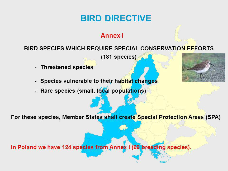 BIRD DIRECTIVE BIRD SPECIES WHICH REQUIRE SPECIAL CONSERVATION EFFORTS (181 species) -Threatened species -Species vulnerable to their habitat changes -Rare species (small, local populations) For these species, Member States shall create Special Protection Areas (SPA) Annex I In Poland we have 124 species from Annex I (69 breeding species).