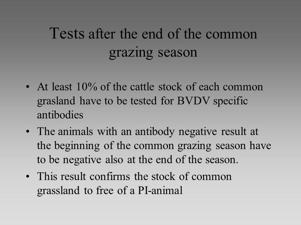 Tests after the end of the common grazing season At least 10% of the cattle stock of each common grasland have to be tested for BVDV specific antibodies The animals with an antibody negative result at the beginning of the common grazing season have to be negative also at the end of the season.