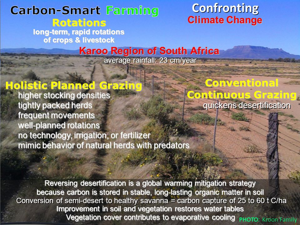 Reversing desertification is a global warming mitigation strategy because carbon is stored in stable, long-lasting organic matter in soil Karoo Region of South Africa Holistic Planned Grazing average rainfall: 23 cm/year Conversion of semi-desert to healthy savanna = carbon capture of 25 to 60 t C/ha Climate Change Confronting higher stocking densities tightly packed herds frequent movements well-planned rotations no technology, irrigation, or fertilizer mimic behavior of natural herds with predators Conventional Continuous Grazing Improvement in soil and vegetation restores water tables quickens desertification Vegetation cover contributes to evaporative cooling long-term, rapid rotations of crops & livestock Rotations PHOTO: Kroon Family
