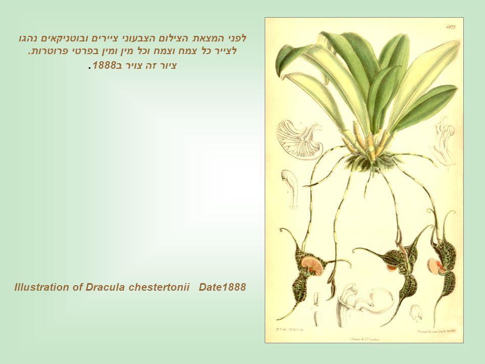 Illustration of Dracula chestertonii Date1888 לפני המצאת הצילום הצבעוני ציירים ובוטניקאים נהגו לצייר כל צמח וצמח וכל מין ומין בפרטי פרוטרות.