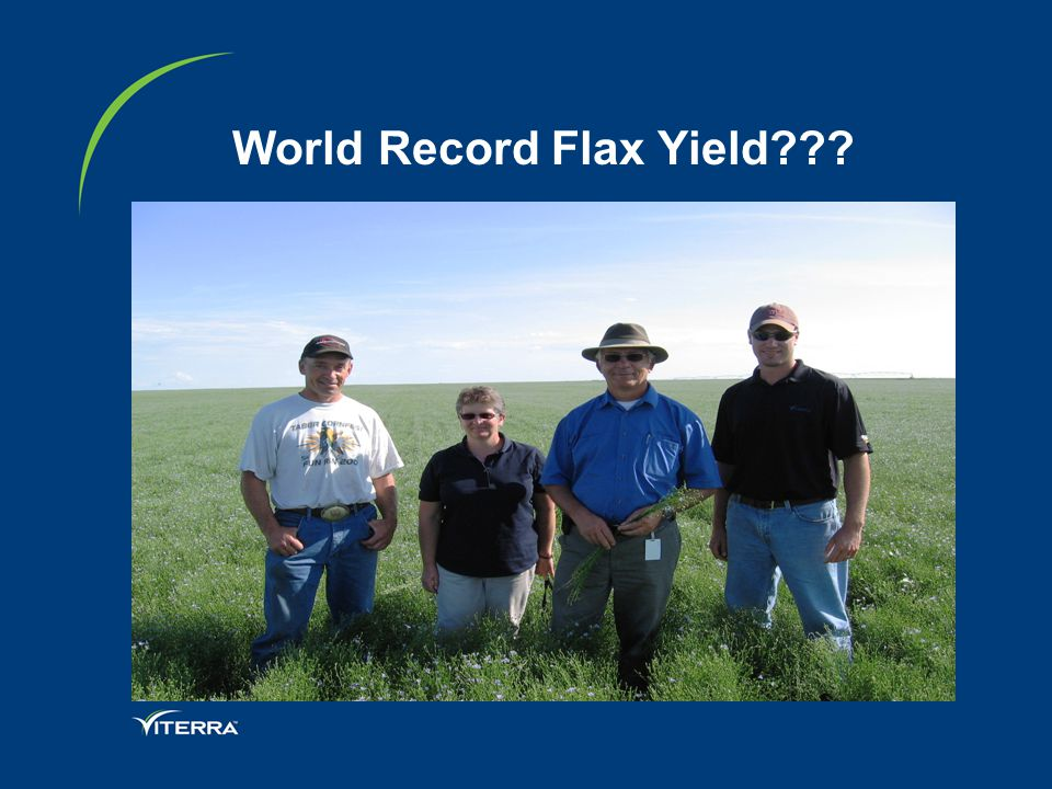 World Record Flax Yield???