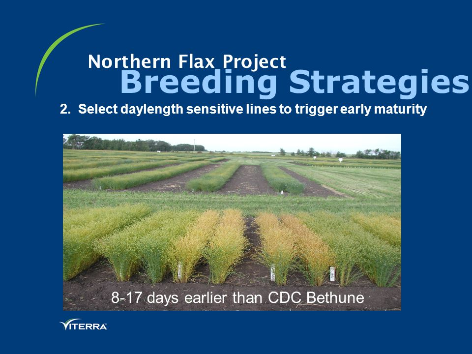 Northern Flax Project Breeding Strategies 2.