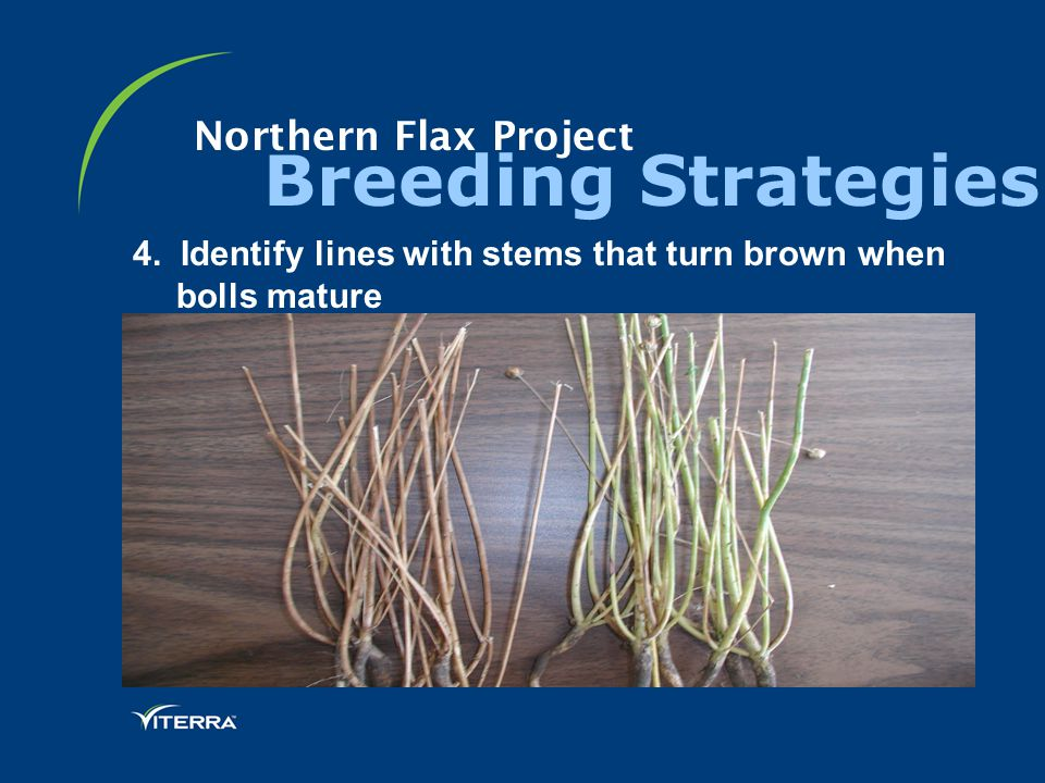 Northern Flax Project Breeding Strategies 4.