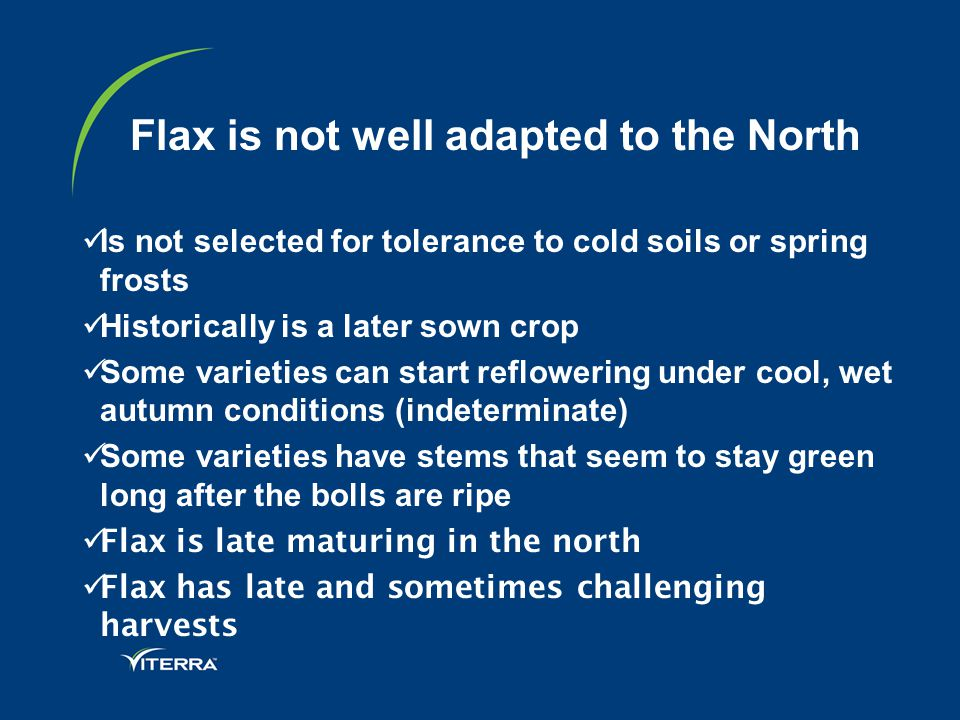 Flax is not well adapted to the North Is not selected for tolerance to cold soils or spring frosts Historically is a later sown crop Some varieties can start reflowering under cool, wet autumn conditions (indeterminate) Some varieties have stems that seem to stay green long after the bolls are ripe Flax is late maturing in the north Flax has late and sometimes challenging harvests
