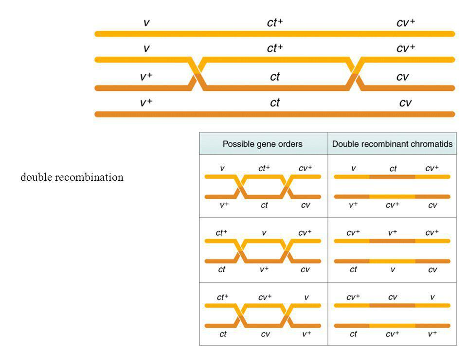 double recombination