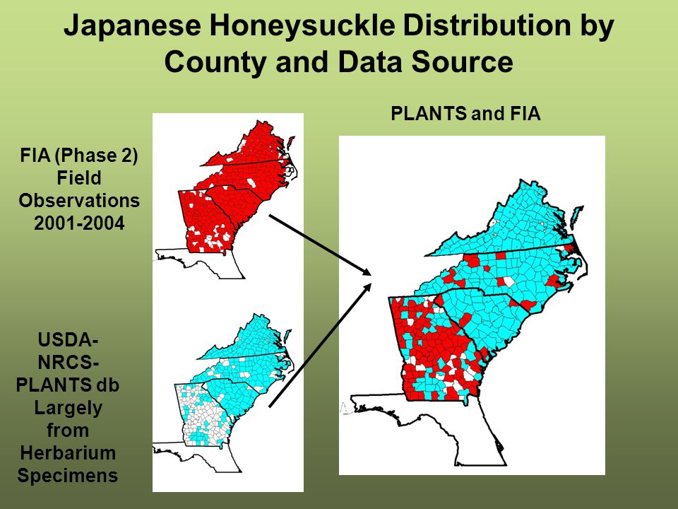 Japanese Honeysuckle Distribution by County and Data Source USDA- NRCS- PLANTS db Largely from Herbarium Specimens FIA (Phase 2) Field Observations 2001-2004 PLANTS and FIA