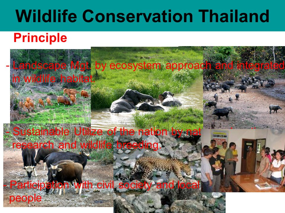 Principle - Landscape Mgt. by ecosystem approach and integrated in wildlife habitat.