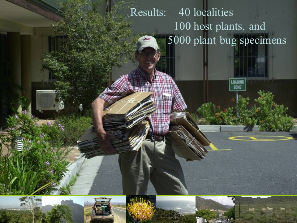 Results: 40 localities 100 host plants, and 5000 plant bug specimens