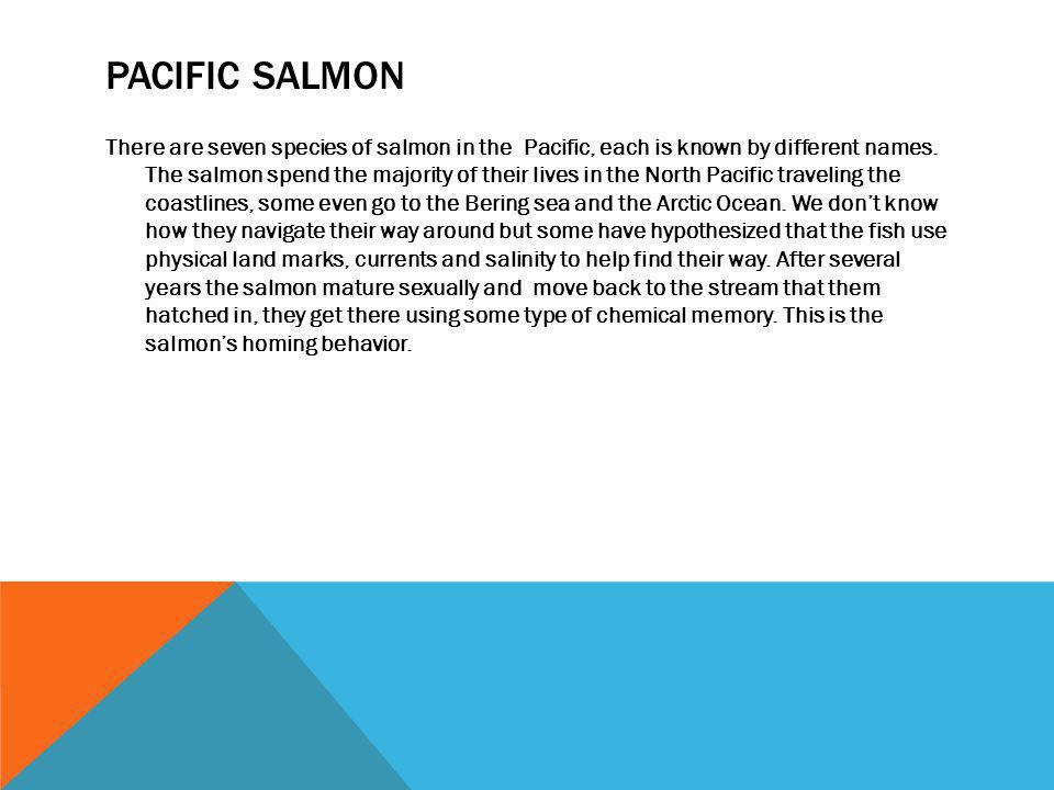 PACIFIC SALMON There are seven species of salmon in the Pacific, each is known by different names. The salmon spend the majority of their lives in the