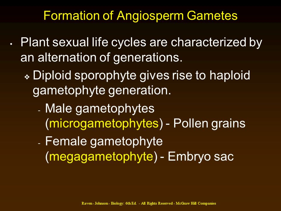 Raven - Johnson - Biology: 6th Ed. - All Rights Reserved - McGraw Hill Companies Formation of Angiosperm Gametes Plant sexual life cycles are characte