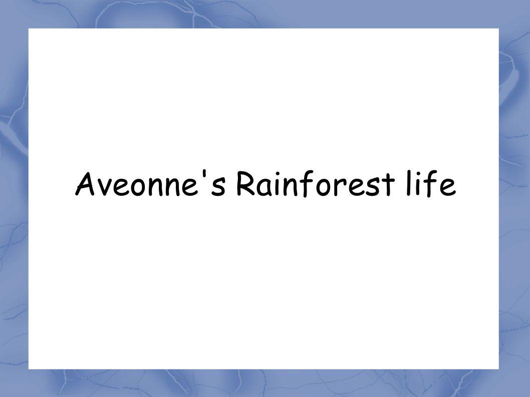 Aveonne s Rainforest life