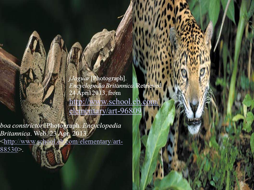 boa constrictor. Photograph. Encyclopedia Britannica.