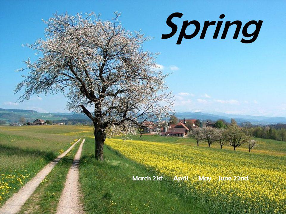 It smells spring in the air.Flowers appear in the meadows,in the parks and on the balconies.