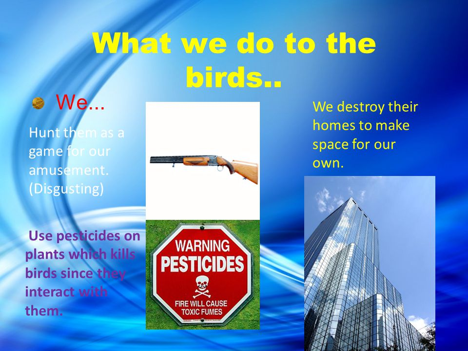 The Impact of Human activity and Climate change on the Birds.