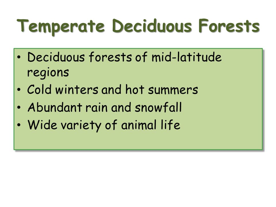 Temperate Deciduous Forests Deciduous forests of mid latitude regions Cold winters and hot summers Abundant rain and snowfall Wide variety of animal life Deciduous forests of mid latitude regions Cold winters and hot summers Abundant rain and snowfall Wide variety of animal life