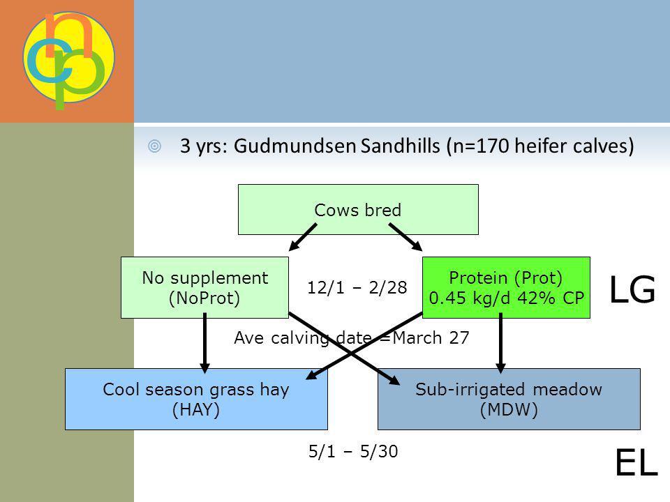 3 yrs: Gudmundsen Sandhills (n=170 heifer calves) Cows bred No supplement (NoProt) Protein (Prot) 0.45 kg/d 42% CP Cool season grass hay (HAY) Sub-irr
