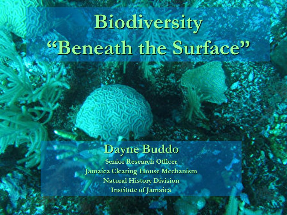 Biodiversity Beneath the Surface Dayne Buddo Senior Research Officer Jamaica Clearing House Mechanism Natural History Division Institute of Jamaica