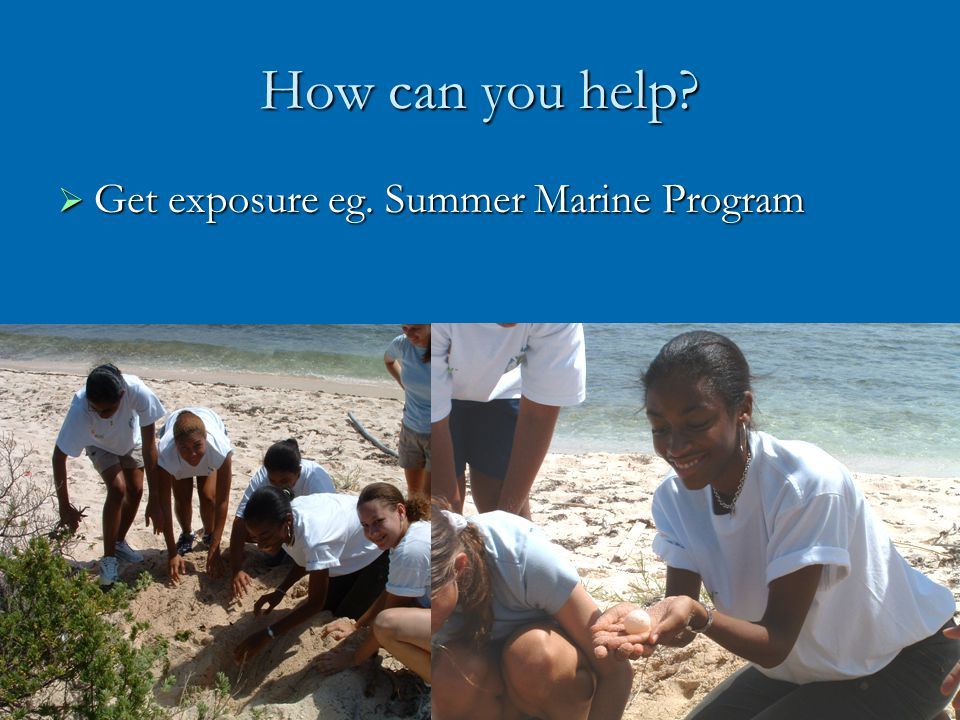 How can you help Get exposure eg. Summer Marine Program Get exposure eg. Summer Marine Program