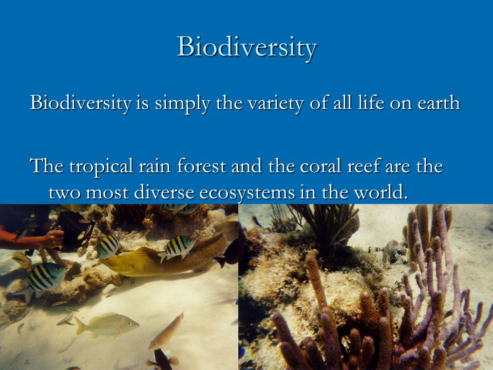 Biodiversity Biodiversity is simply the variety of all life on earth The tropical rain forest and the coral reef are the two most diverse ecosystems in the world.