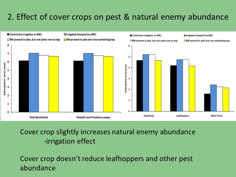 2. Effect of cover crops on pest & natural enemy abundance Cover crop slightly increases natural enemy abundance -irrigation effect Cover crop doesnt