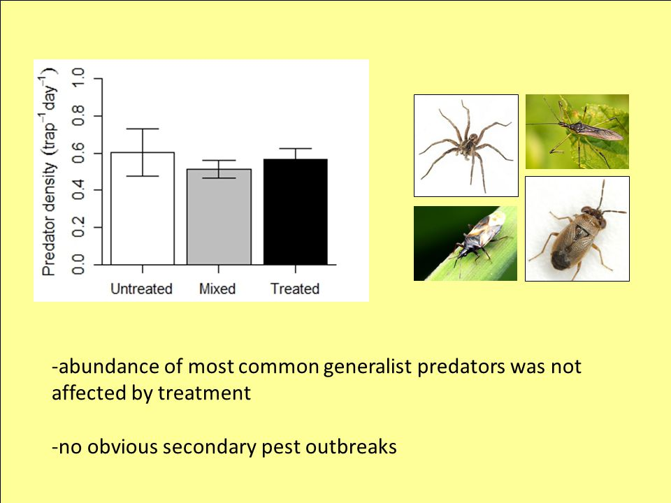 -abundance of most common generalist predators was not affected by treatment -no obvious secondary pest outbreaks