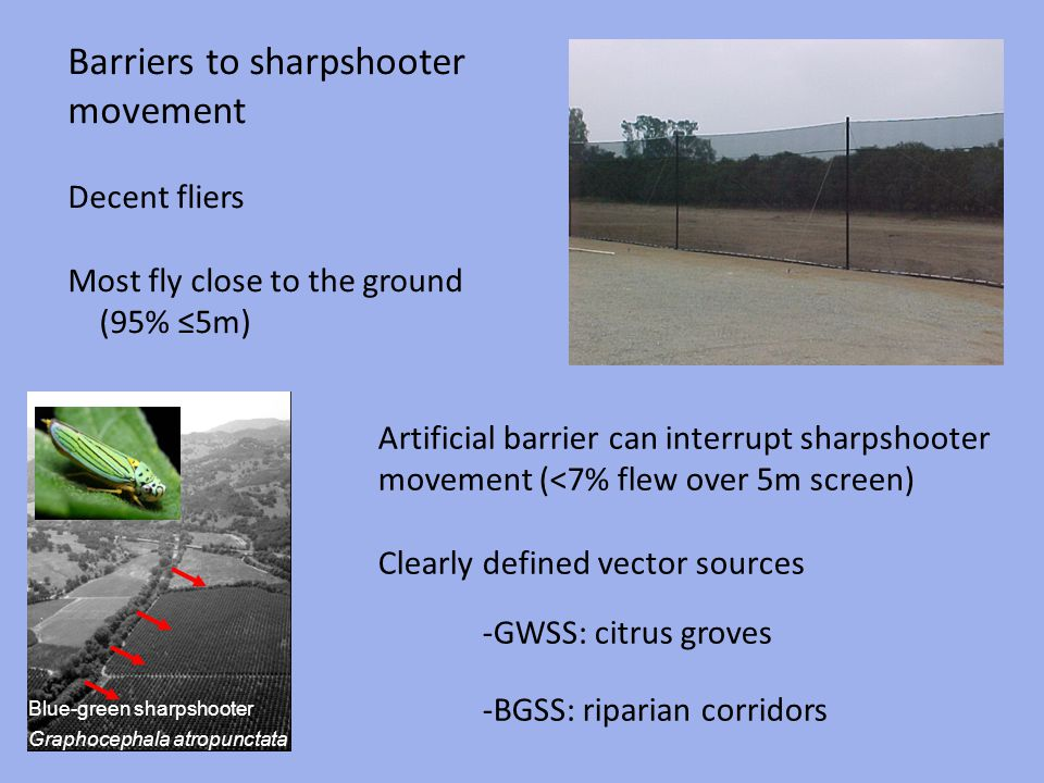 Blue-green sharpshooter Graphocephala atropunctata Barriers to sharpshooter movement Decent fliers Most fly close to the ground (95% 5m) Artificial ba