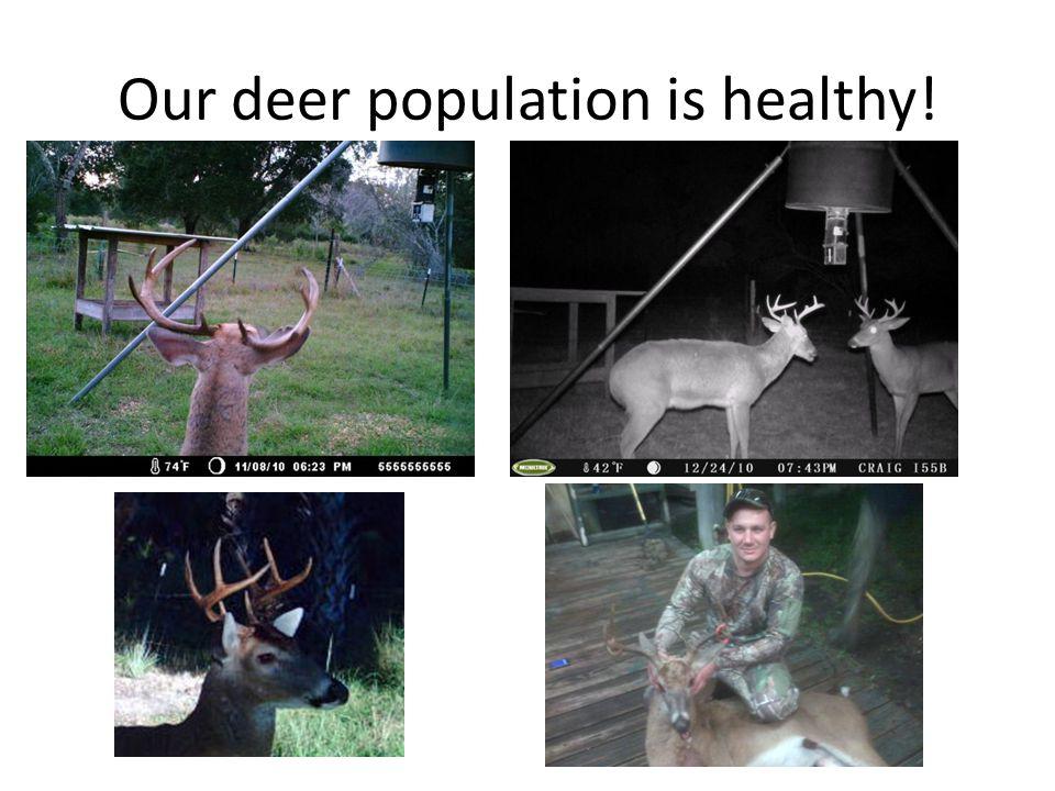 Our deer population is healthy!