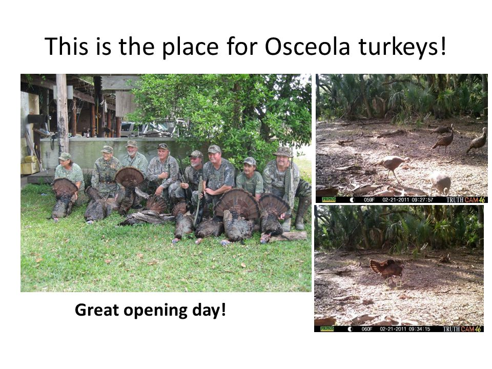 This is the place for Osceola turkeys! Great opening day!