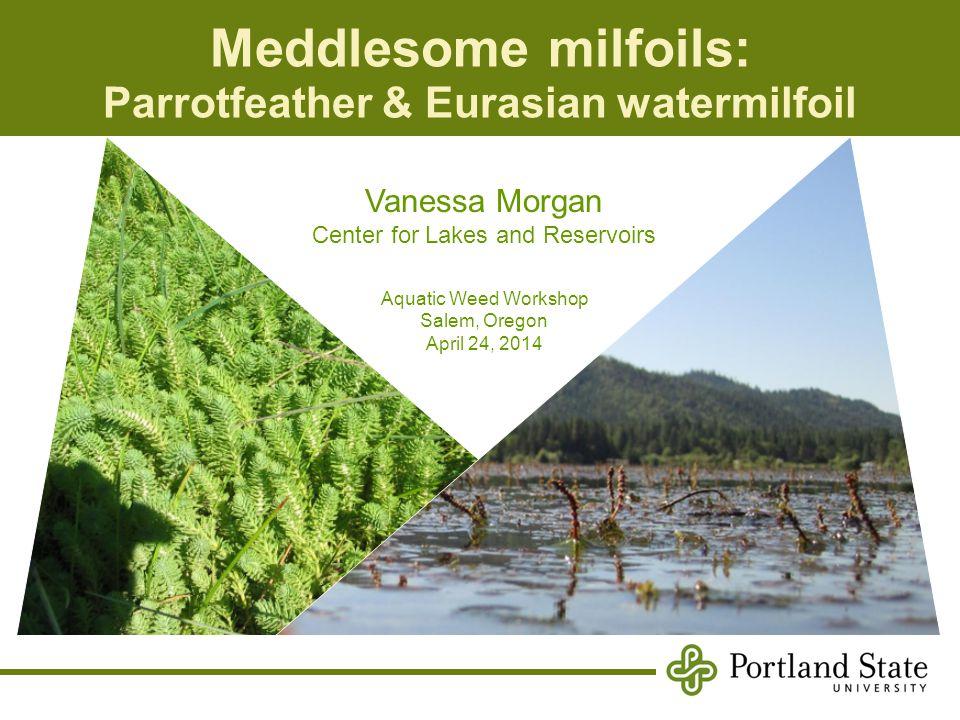Overview Haloragaceae (water-milfoil family) Eight genera;±100 species Dicot Annual & perennial herbs Generally monoecious & aquatic Myriophyllum spp.