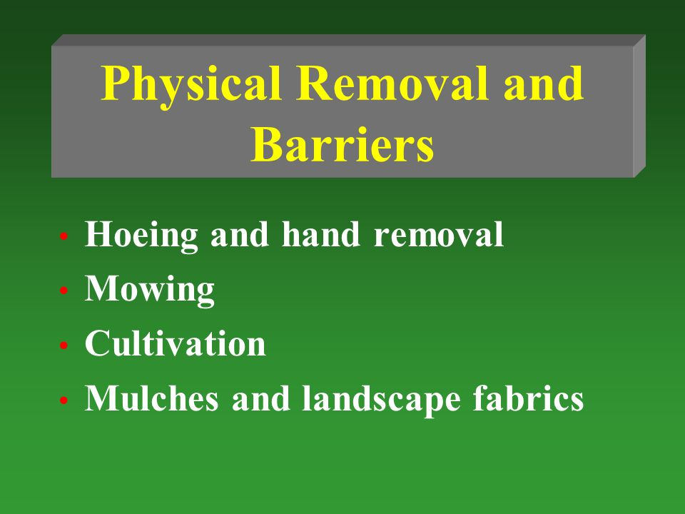 Physical Removal and Barriers Hoeing and hand removal Mowing Cultivation Mulches and landscape fabrics