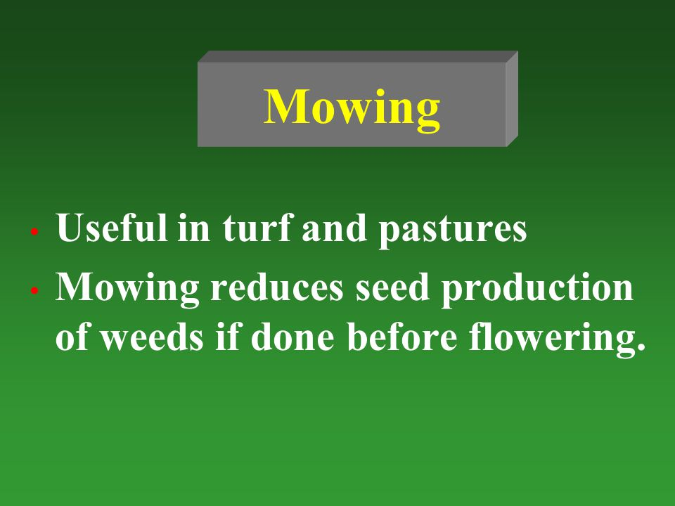 Mowing Useful in turf and pastures Mowing reduces seed production of weeds if done before flowering.