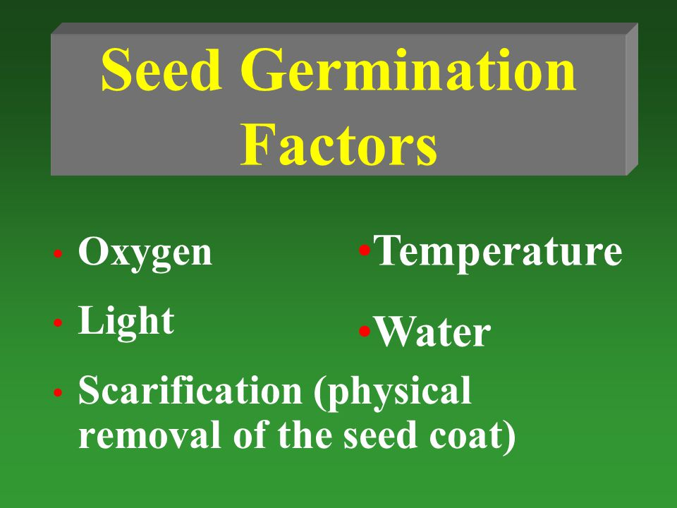 Seed Germination Factors Oxygen Light Scarification (physical removal of the seed coat) Temperature Water