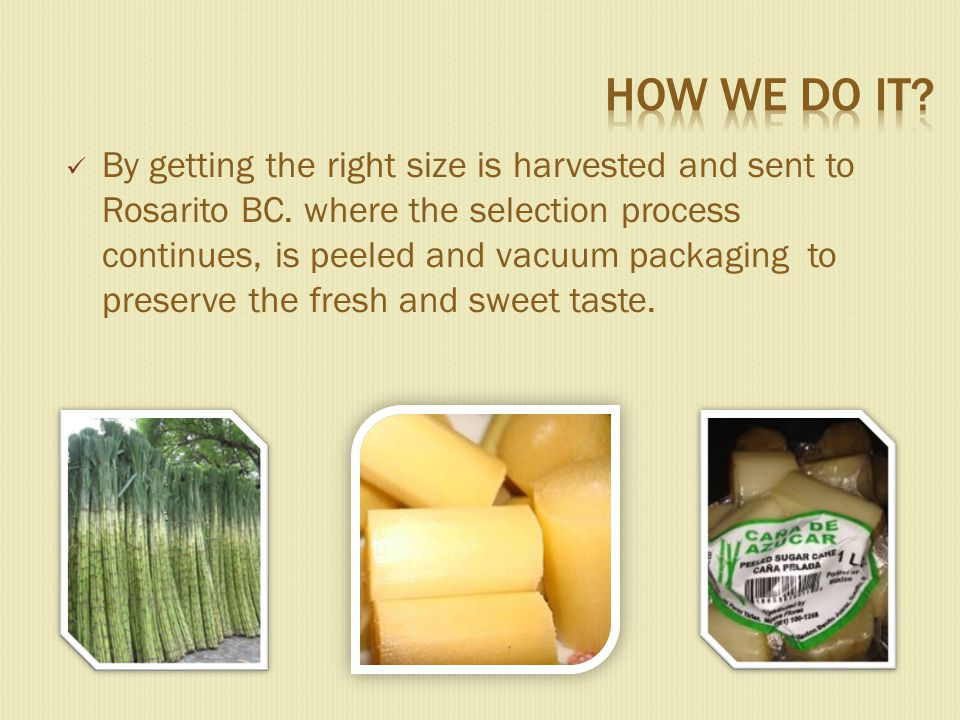By getting the right size is harvested and sent to Rosarito BC.