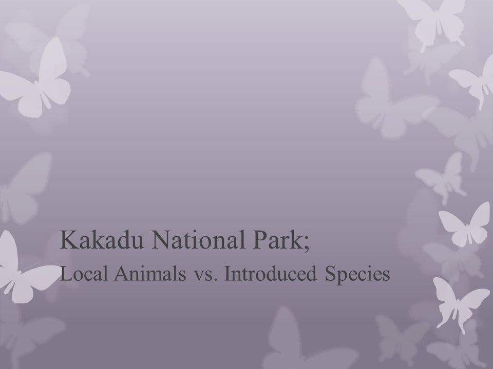 Background of the National Park; Kakadu National Park located in the Northern Territory of Australia.