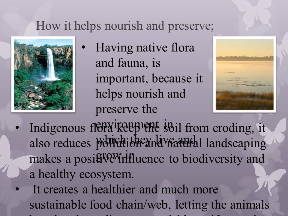 Introduced Species; Introduced fauna (animals once either native to another country which now lives and breeds in another country) has had a major negative impact on the environment.