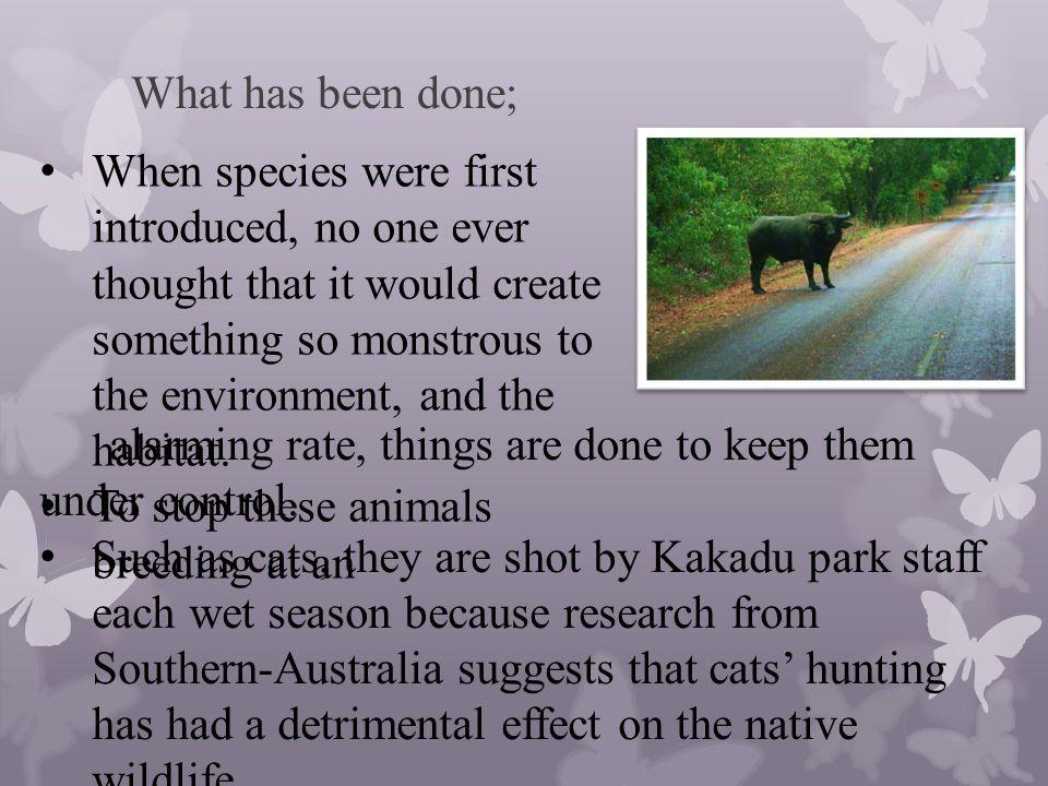 Bibliography; http://www.australia.com/contentimages/4.3.15_Icons_N T_Kakadu.gifhttp://www.australia.com/contentimages/4.3.15_Icons_N T_Kakadu.gif http://en.wikipedia.org/wiki/Flora_of_Kakadu_National_ Parkhttp://en.wikipedia.org/wiki/Flora_of_Kakadu_National_ Park http://en.wikipedia.org/wiki/Kakadu_National_Park http://www.environment.gov.au/parks/kakadu/manageme nt/programs/feral-animals.htmlhttp://www.environment.gov.au/parks/kakadu/manageme nt/programs/feral-animals.html http://en.wikipedia.org/wiki/File:Water_Buffalo_at_Fog g_Dam_(1).jpghttp://en.wikipedia.org/wiki/File:Water_Buffalo_at_Fog g_Dam_(1).jpg http://curiosity.discovery.com/question/how-native- plants-help-environmenthttp://curiosity.discovery.com/question/how-native- plants-help-environment http://www.territoryexpeditions.com.au/Wildlife-to-see- in-Kakadu-National-Parkhttp://www.territoryexpeditions.com.au/Wildlife-to-see- in-Kakadu-National-Park