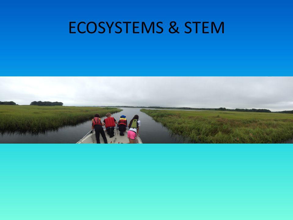 ECOSYSTEMS & STEM